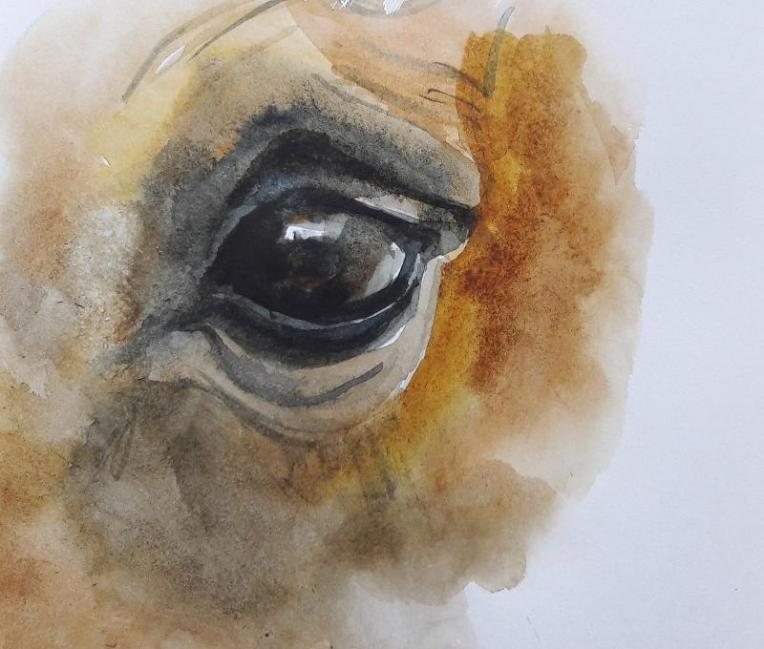 Watercolour drawing; close-up of a horse's eye