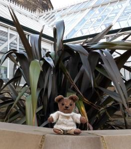 Treacle, my bear, outside the glasshouses